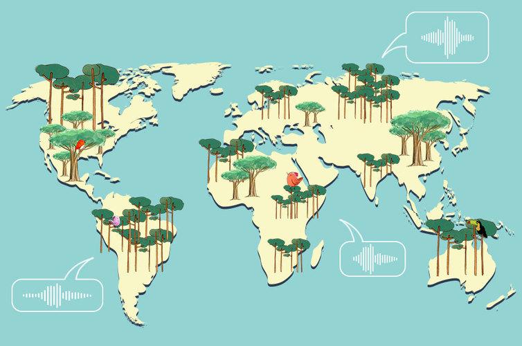 Mapa de los sonidos de los bosques del mundo