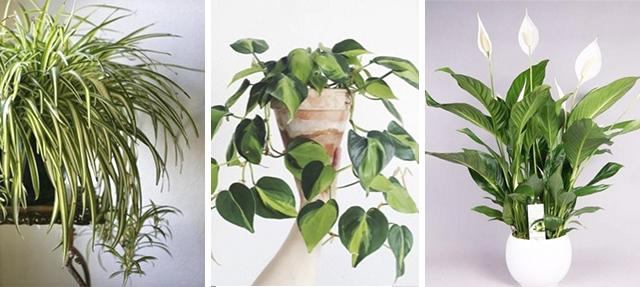 Plantas inmatables