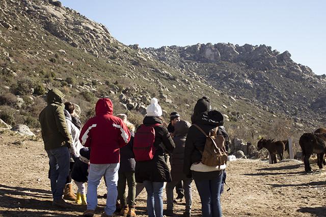 Paseo con burritos por la Sierra de Madrid