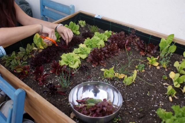 Jardinería Casera